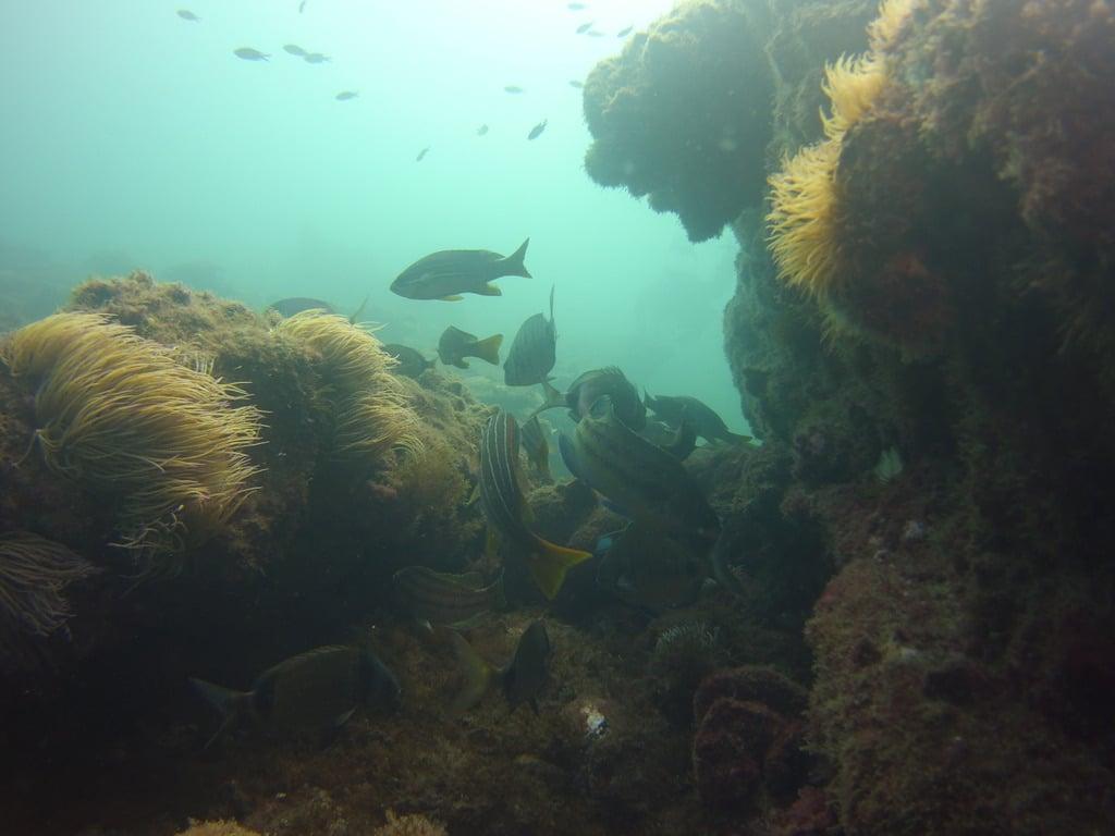 Punta Chullera corals