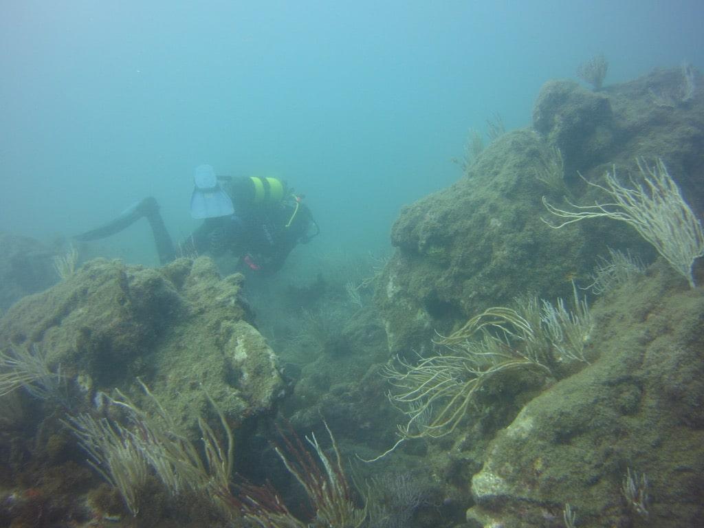 punta chullera coral
