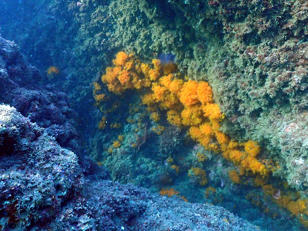 orange coral at torre de la sal